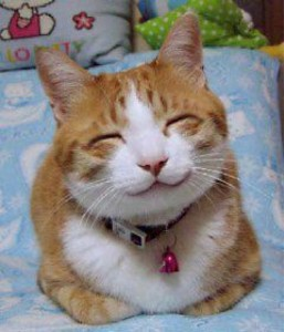 smiling cat for World Kindness Day